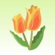 チューリップ【橙】