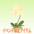 ルナフラワー【ロマンイエロー】