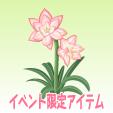 アマリリス【ピンク】