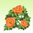 バラ【橙】