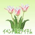 アンシラ【ピンク】