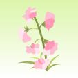 スイートピー【ピンク】