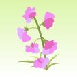 スイートピー【紫】