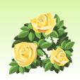 バラ【黄】