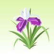 アイリス【紫】