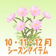 コスモス【ピンク】