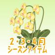 胡蝶蘭【黄】
