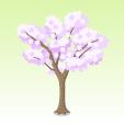 チャリティー桜【紫】