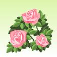 バラ【ピンク】