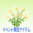 天空の星の花