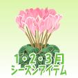 シクラメン【ピンク】
