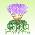 シクラメン【紫】