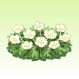 ネモフィラ【ホワイト】