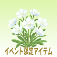 ナデシコ【白】