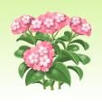 ヘリオトロープ【ピンク】