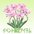 フリージア【ピンク】
