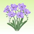 フリージア【紫】