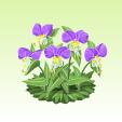 露草【紫】