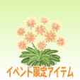 レウィシア【オレンジ】