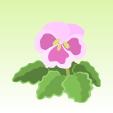 パンジー【ピンク】