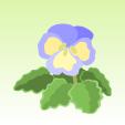 パンジー【青】