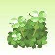 幸せ願う四つ葉のクローバー