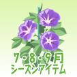アサガオ【紫】