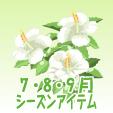 ハイビスカス【白】