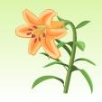 ユリ【橙】