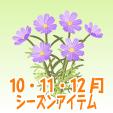コスモス【紫】