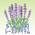 ラベンダー【紫】