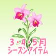 カトレア【ピンク】