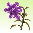 ベルベットのユリ【深紫】