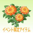 ランタナ【オレンジ】